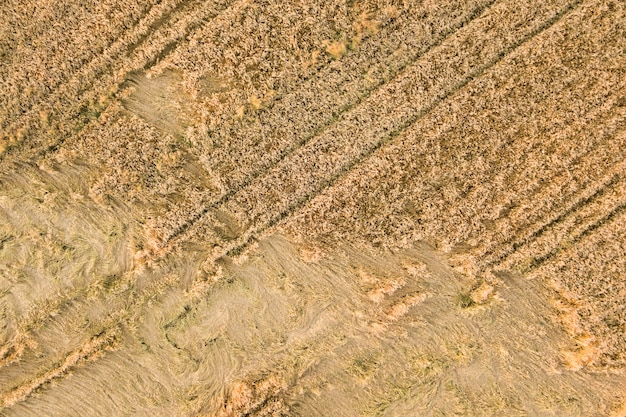 Вид с воздуха на спелое поле фермы, готовое к уборке с упавшими, разбитыми ветром головами пшеницы. поврежденные посевы и концепция отказа сельского хозяйства.