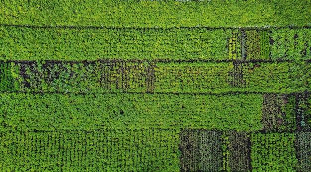 農地の緑の野菜の列の航空写真