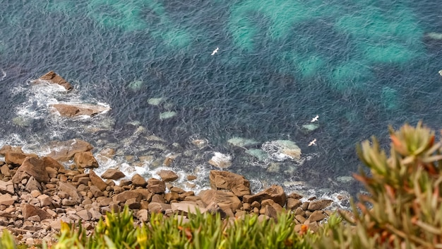 崖の隣の海の上を飛ぶカモメの空撮。