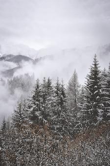 山の中の雪に覆われた木の空撮