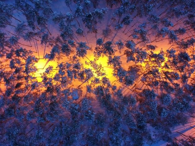 Вид с воздуха на заснеженные сосны и уличные фонари ночью