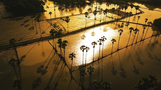 夕焼け空と砂糖椰子の木の空撮