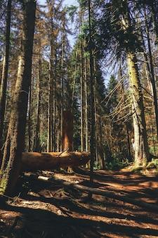 Вид с воздуха на летние зеленые деревья в лесу в горах. лесное дерево вудс.