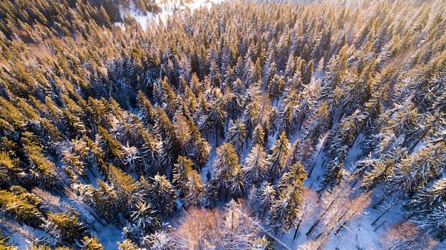 雪の丘の上の背の高い美しい緑のトウヒの木の空撮