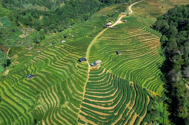 Аэрофотоснимок чайной плантации в чиангмае, таиланд