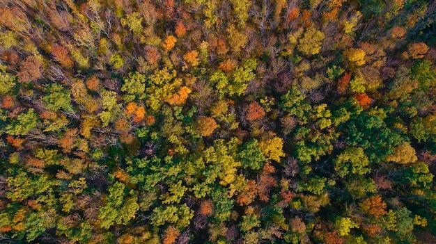 秋の森の空撮。オレンジ、黄色、緑の木々。森のテクスチャ。