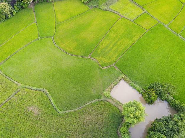 Аэрофотоснимок зеленых рисовых полей, природа, сельскохозяйственная ферма, фон, рисовое поле сверху, тропа, сельскохозяйственные участки различных культур в зеленом и водном пруду, вид с высоты птичьего полета