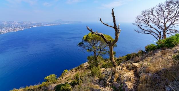 ビーチの隣の海と山の頂上にある木々の空撮。