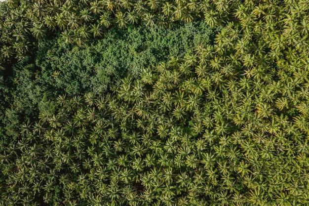 インドネシアのメンタワイ諸島の熱帯の木々の空撮-背景に最適