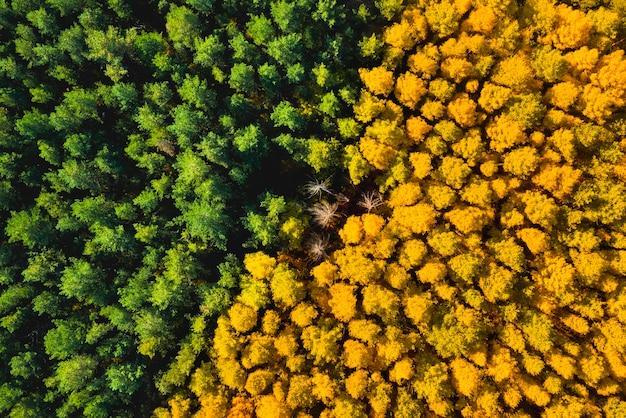 Аэрофотоснимок желто-зеленого леса осенью сверху
