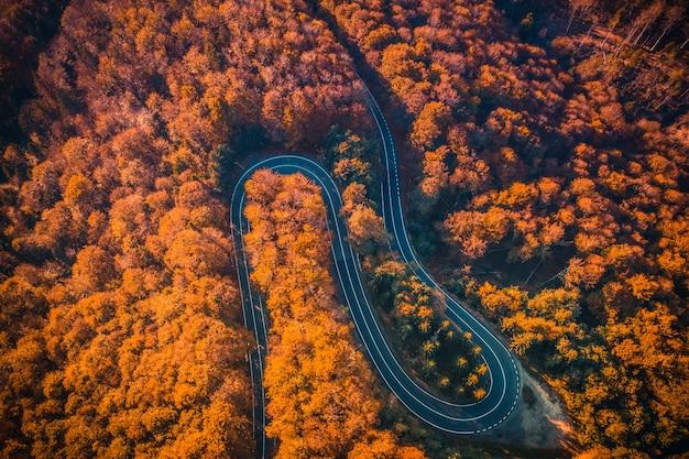 가 숲에서 transfagarasan 도로의 항공보기