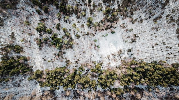 Вид с воздуха на деревья, покрытые снегом в лесу в мюнхене