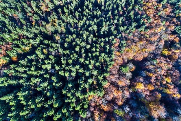 秋のヴォージュ山脈の木々の空撮。フランス、アルザス