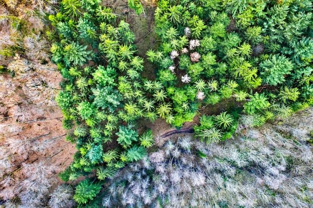 春先のヴォージュ山脈の木々の空撮。フランス、アルザス