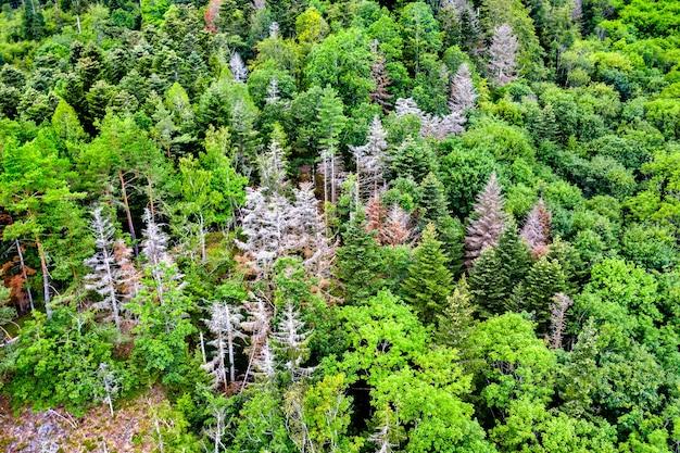 夏のヴォージュ山脈の木々の空撮。フランス、アルザス