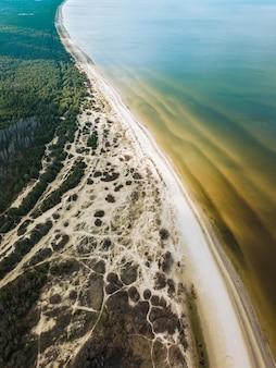 Вид с воздуха на деревья возле спокойного моря