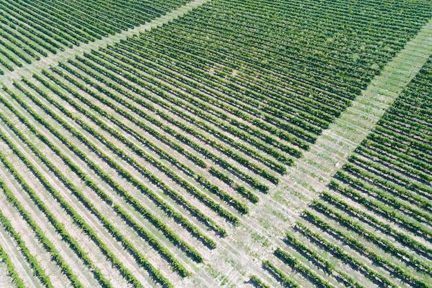ブドウ園の航空写真