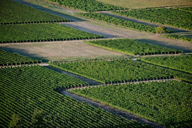 ブドウ畑の空撮