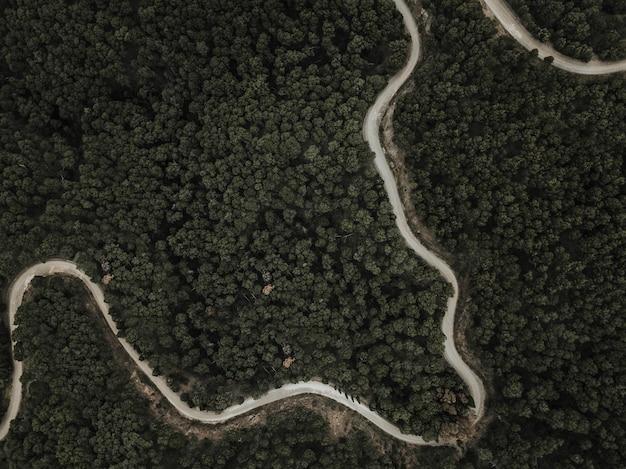 Вид с воздуха на извилистую дорогу и зеленые тропические деревья