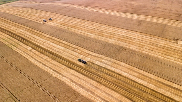 Вид с воздуха на комбайн, работающий на большом пшеничном поле