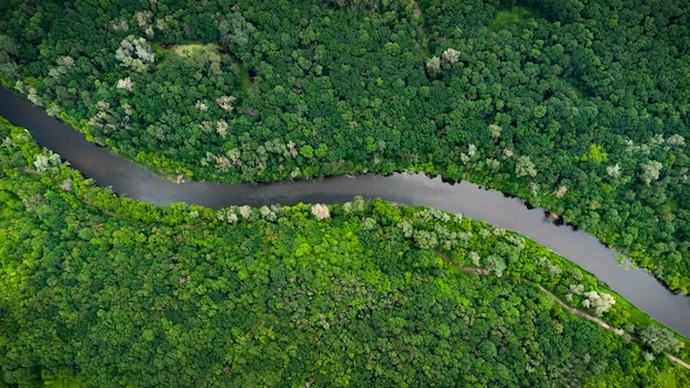 Вид с воздуха на реку, которая находится в зеленом лесу.