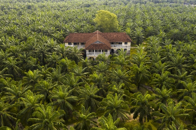 Aerial view of a palm trees at a palm oil plantation in south east asia