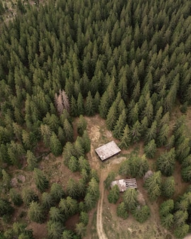 Vista aerea di una pineta.