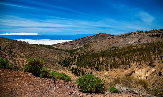 Aerial view of the pine forests on the western slopes of teide volcano caldera boca de chavao, tenerife, canary islands