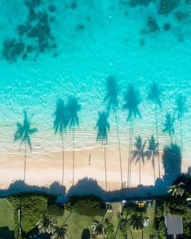Aerial view of the reflections of the palm trees in the turquoise water of the sea