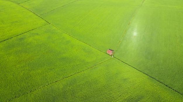Вид с воздуха на рисовые поля утром, таиланд