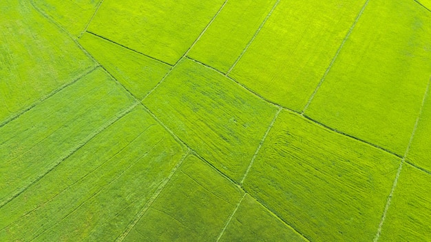 Aerial view rice fields in the morning, thailand