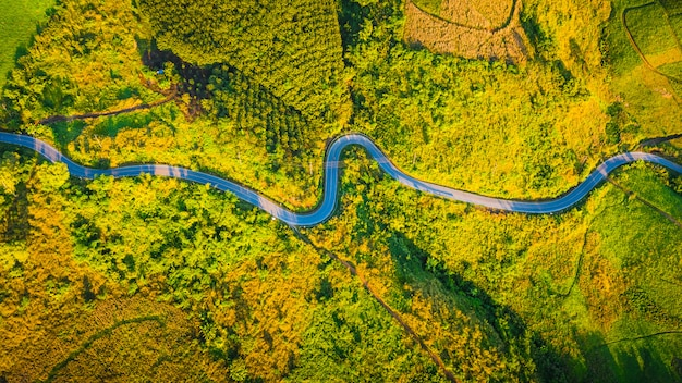 Aerial view road curve on the mountain in the autumn season at chiang rai thailand