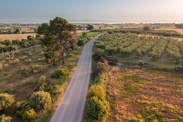 Aerial view of a road going through a rural area with golden fields and olive plantations