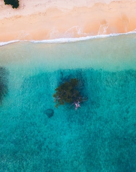 Aerial view of sandy beach with tree in the water