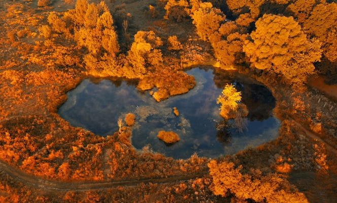 Aerial view of a small lake in the autumn forest early in the morning at sunrise. beautiful autumn landscape shot by a drone.