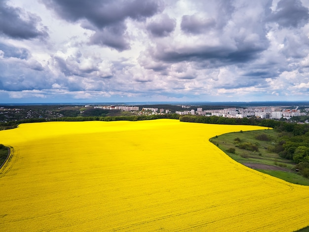 Aerial view of spring rapeseed flower field, bird's eye view from a drone closeup of a passing canola crop with blue skies and fluffy clouds in summer.