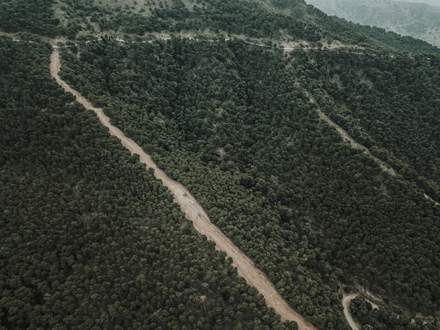 Aerial view of straight dirt road in forest landscape