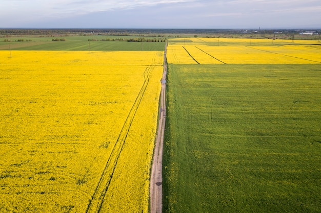 Aerial view of straight ground road in green and yellow fields with blooming rapeseed plants on sunny spring or summer day.