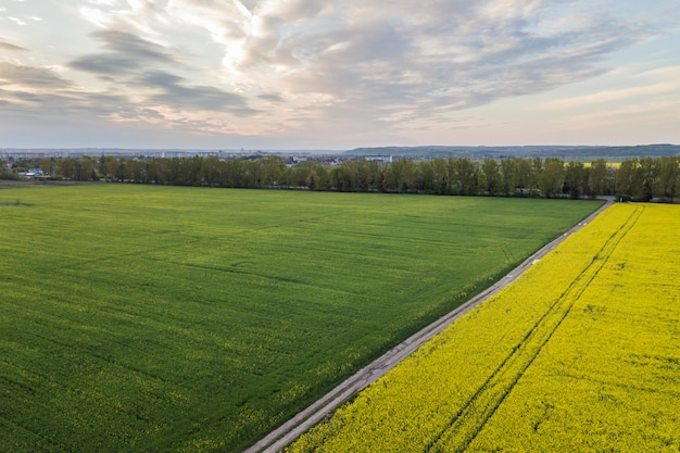 Aerial view of straight ground road with rain puddles in green fields with blooming rapeseed plants on blue sky copy space . drone photography.