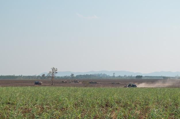 Aerial view of sugar cane plantation
