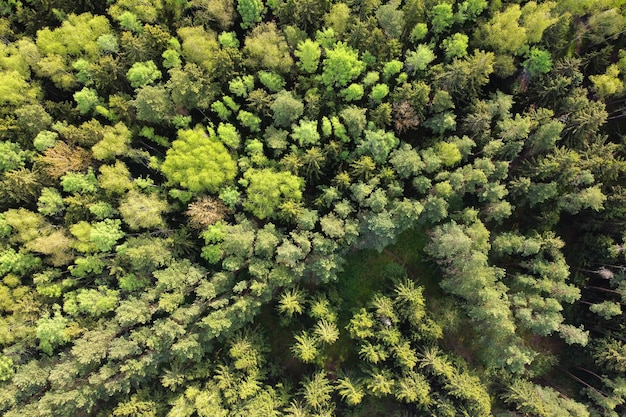 Aerial view of summer forest landscape, green trees, top view