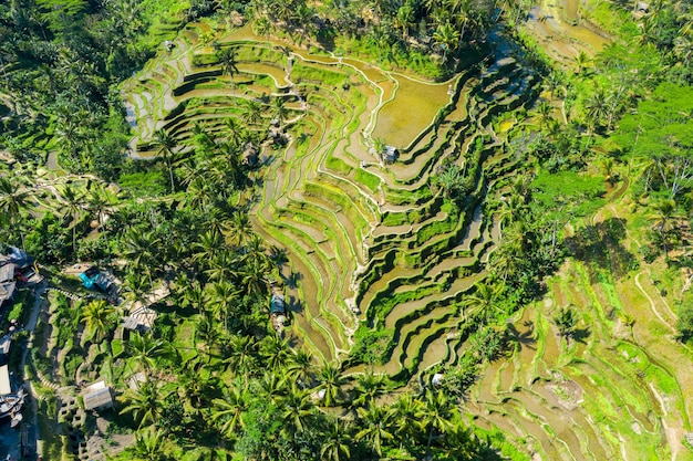 Aerial view of terraced rice fields bali, indonesia