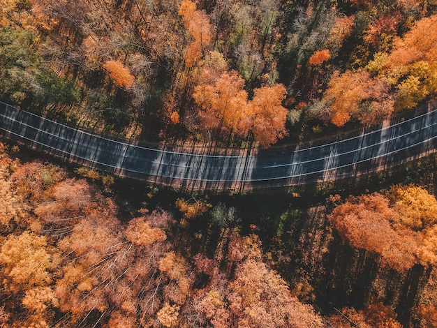 Aerial view of thick forest in autumn with road cutting through. russia, st. petersburg