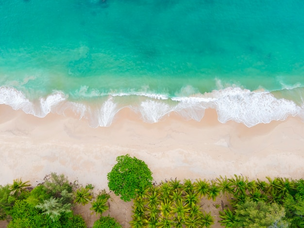 Aerial view top view beautiful topical beach with white sand coconut palm trees and sea. top view empty and clean beach.
