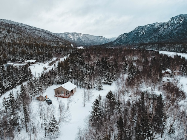 Aerial view of trees in winter