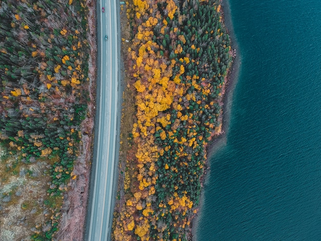 Aerial view of tress beside road