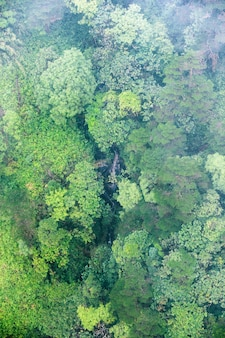 Aerial view of tropical rainforest in foggy day