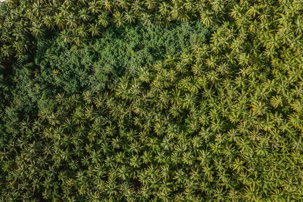 Aerial view of the tropical trees in the mentawai islands in indonesia - perfect for background