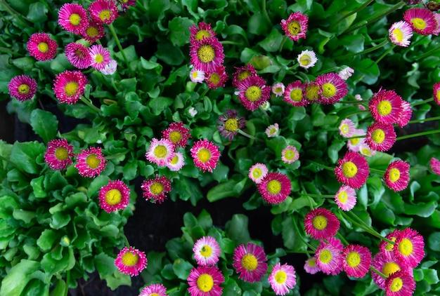 Aerial view of varied flowers