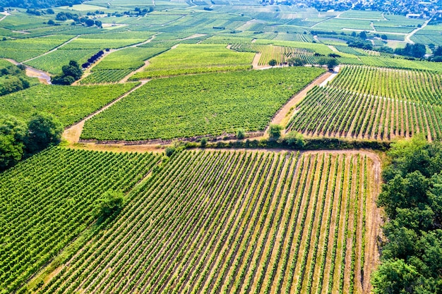 Aerial view of vineyards in alsace, the bas-rhin department of france